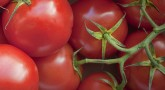 VA dietitian says gardening offers healthier diet, other benefits