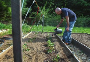 Ron Witcomb working in the garden