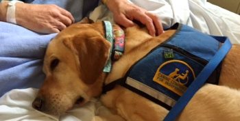 Image of Service dog Waffle with a patient.