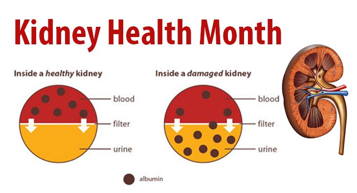 Kidney Month graphic showing that kidneys filter the blood.