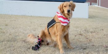 IMAGE: Service dog Honor