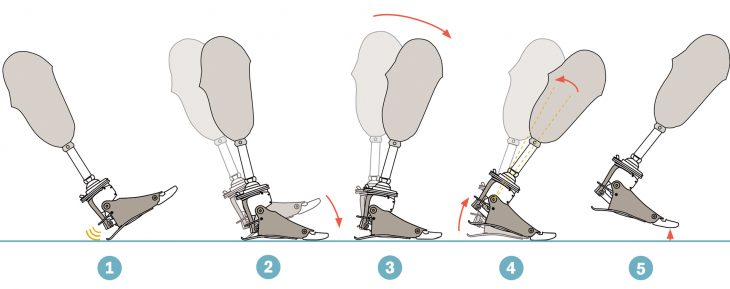 Diagram of prosthetic foot movement
