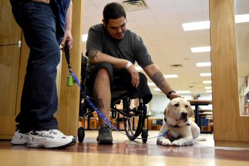 A Veteran in a wheelchair pets a service dog.