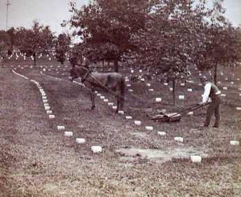 Horse mower at Chattanooga National Cemetery 1906