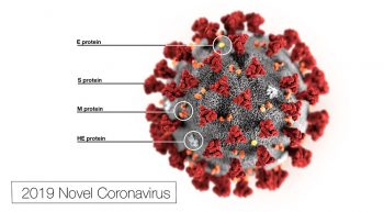 Microscopic image of the Corona virus