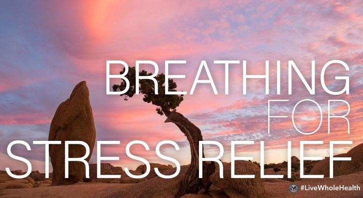 Breath--something we do 20,000 times a day--is one of the body's most important functions, and one that we can notice in every moment.