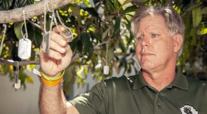 Man reading dog tag hanging from tree